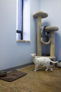 Cat wing photo of white cat