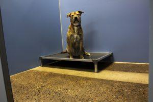 Hamlet in Dog Wing- Dog Boarding Bed