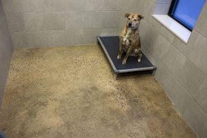 Dog in Dog Suite Image - Dog Wing