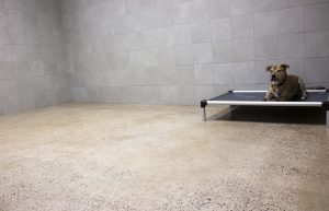 Dog Boarding Private Suites image