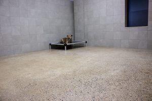 Large Dog Suite - Dog Wing - Boarding