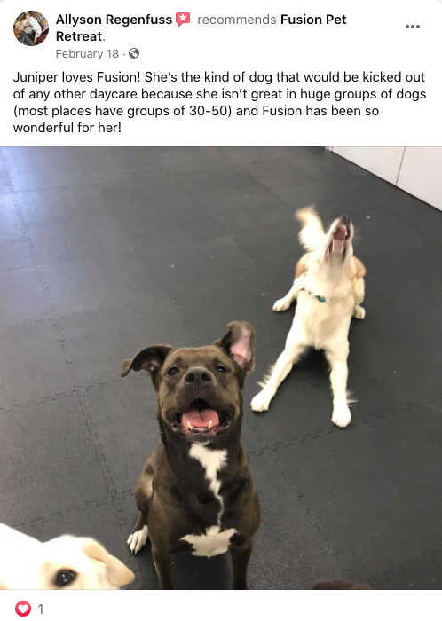 Fusion Pet Retreat Testimonial Positive Review Social 1